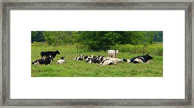 Resting After A Bountiful Feed Framed Print by Tina M Wenger