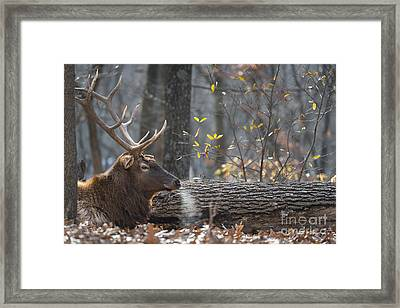 Resting Framed Print by Andrea Silies