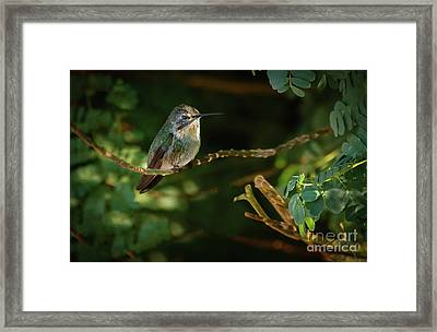 Resting Anna Framed Print by Robert Bales