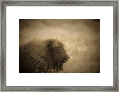 Resting Buffalo Framed Print by Patrick  Flynn