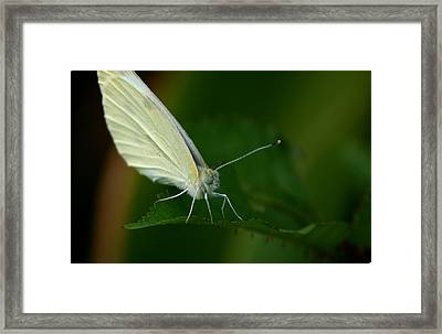 Framed Print featuring the photograph Resting by Cathy Harper