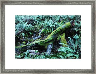 Resting Comfortably Framed Print by Donna Blackhall