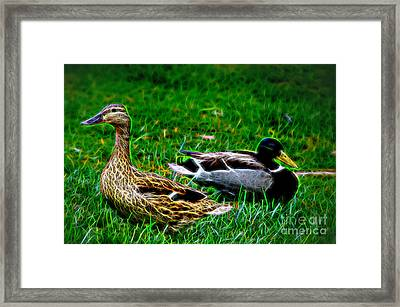 Framed Print featuring the photograph Resting Ducks by Mariola Bitner