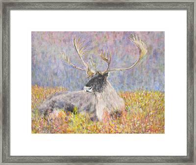 Resting Elk Framed Print by Glenda Crigger