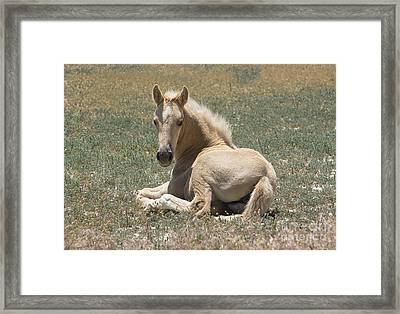 Resting Filly Framed Print by Nicole Markmann Nelson