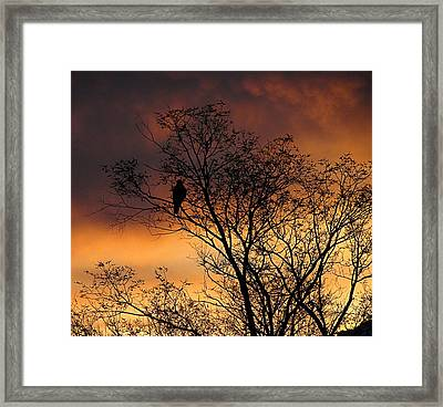 Resting For The Hunt Framed Print
