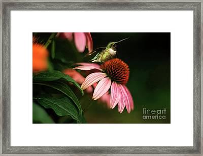 Resting Hummingbird Framed Print