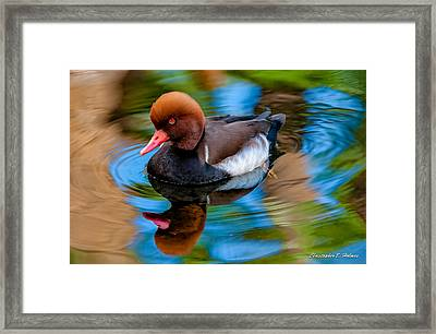 Resting In Pool Of Colors Framed Print