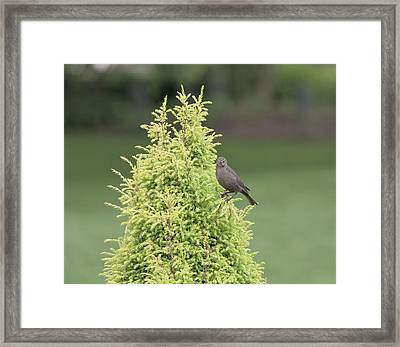 Framed Print featuring the photograph Resting In The Trees by Kim Hojnacki
