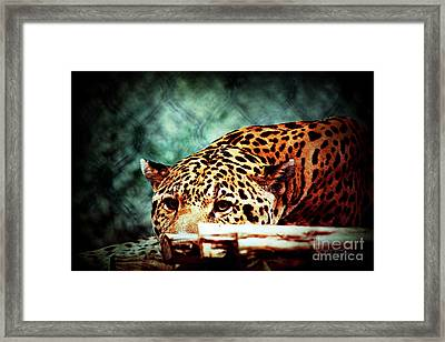 Resting Jaguar Framed Print