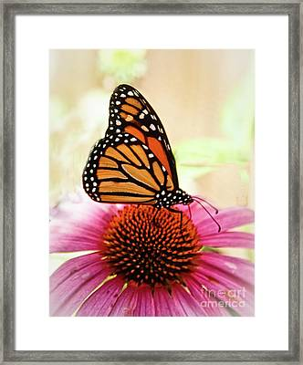 Resting Monarch Butterfly Framed Print