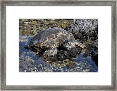 Framed Print featuring the photograph Resting My Head by Pamela Walton