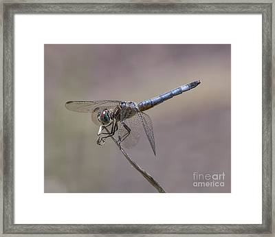 Resting My Wings Framed Print