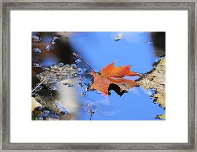 Framed Print featuring the photograph Resting On Gold And Blue by Doris Potter