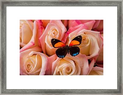 Resting On Pink Roses Framed Print