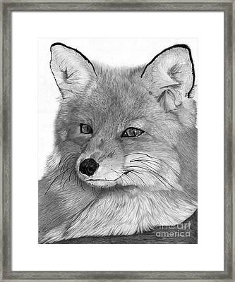 Resting Red Fox Framed Print by Cathleen Lengyel