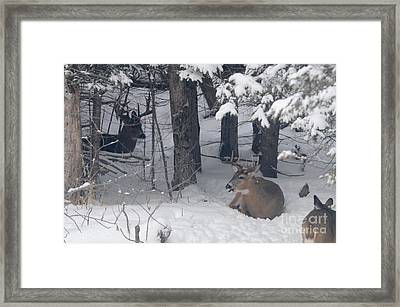 Resting Framed Print by Sandra Updyke