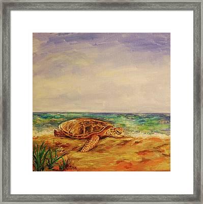 Resting Sea Turtle Framed Print by Danielle Hacker