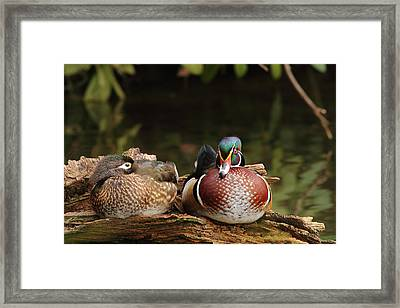 Resting Wood Ducks Framed Print