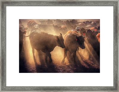 Framed Print featuring the photograph Restless Cattle At Sunset by Quality HDR Photography