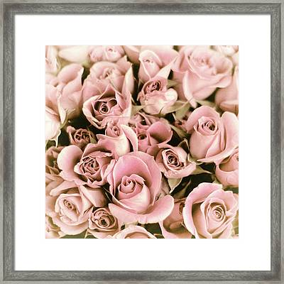 Reticent Rose Framed Print by Jessica Jenney