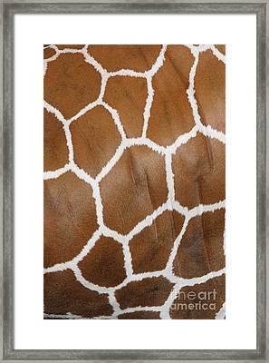 Reticulated Giraffe #2 Framed Print