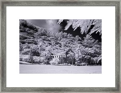 Retired Palms Framed Print by Sean Davey
