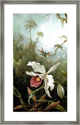 Retouched Masters - Orchid And Hummingbirds In Tropical Forest Framed Print