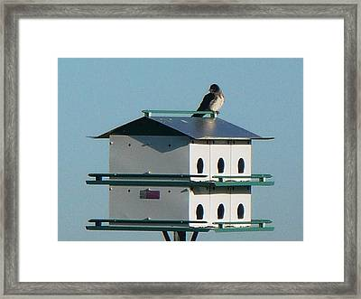Return Of The Purple Martin Framed Print by Jerry Browning