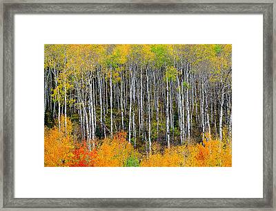 Return To The Aspen Forest Framed Print by Tim Reaves