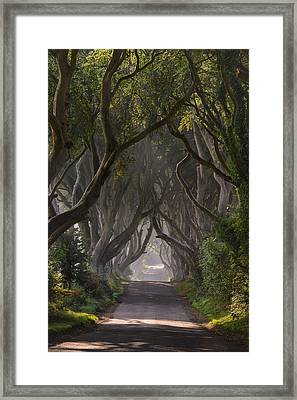 Return To The Dark Hedges Framed Print by Andy Gibson