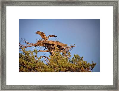 Returning To The Nest Framed Print by Rick Berk