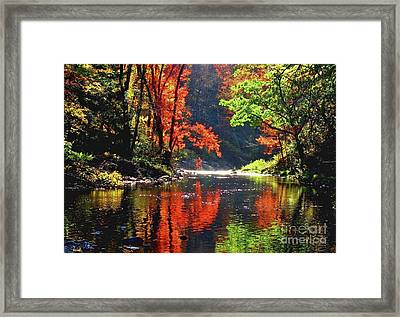 Revealed Framed Print by Sheila Ping
