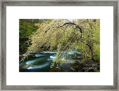 Revealing It's Secrets To The Wind Framed Print by Michael Eingle