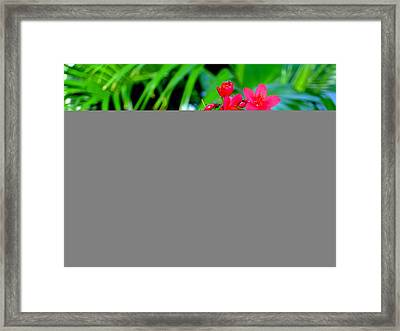 Revealing Paradise Framed Print by Mindy Newman