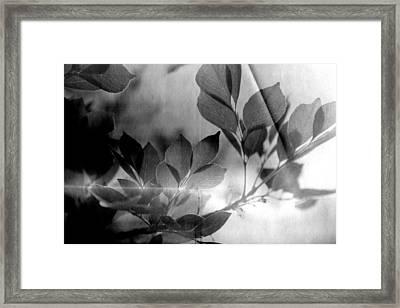 Revel Framed Print