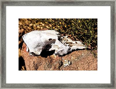 Reversal Of Fortune Framed Print