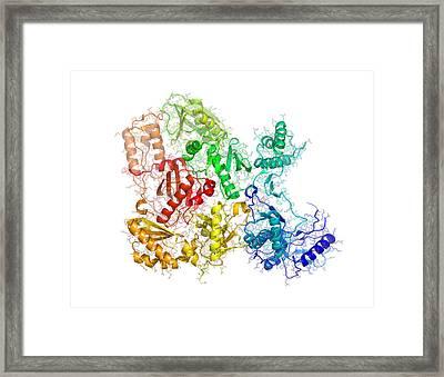 Reverse Transcriptase Enzyme From Hiv Framed Print by Laguna Design