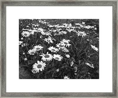 Reward Framed Print by David Sutter