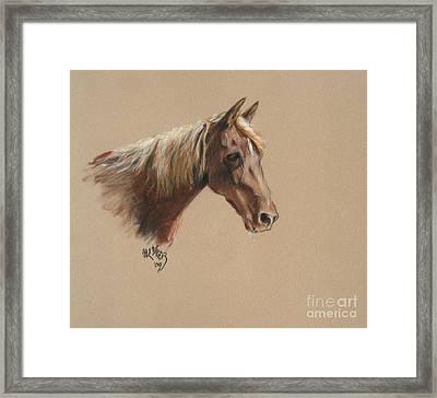 Reyena At The Morgan Horse Ranch Prns Framed Print by Paul Miller