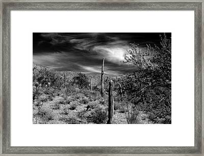Reymert Framed Print by John Gee