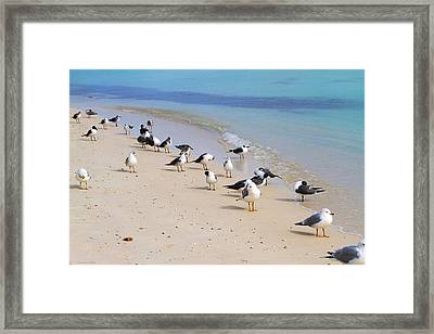 Rhapsody In Seabird Framed Print