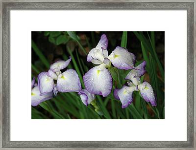 Rhapsody Framed Print by Marie Hicks