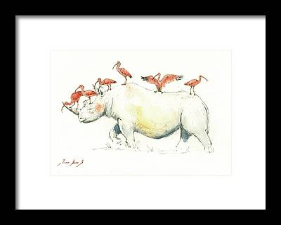 Ibis Framed Prints