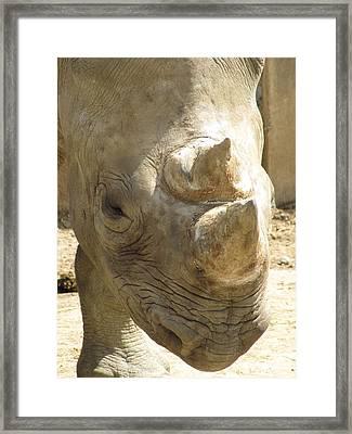 Rhino Closeup Framed Print by George Jones