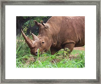 Rhino Framed Print by Jennifer Crites