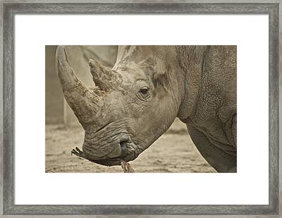 Rhino Framed Print by Michael Peychich