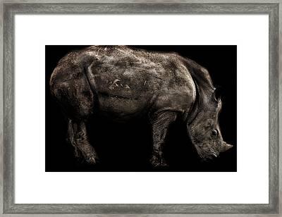 Rhino Portrait Framed Print