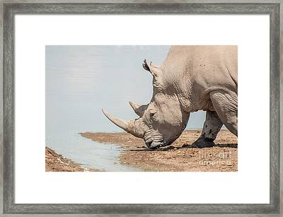 Rhinoceros  At Water Framed Print by Jacques Jacobsz