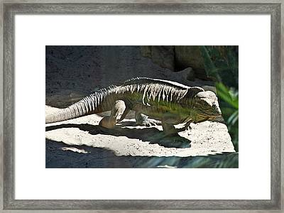 Framed Print featuring the photograph Rhinoceros Iguana by Miroslava Jurcik